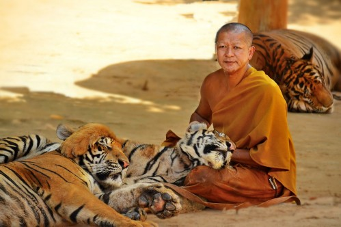 Buddhist Tiger Keeper in Kanchanaburi THAILAND - photo by Renata Blonska
